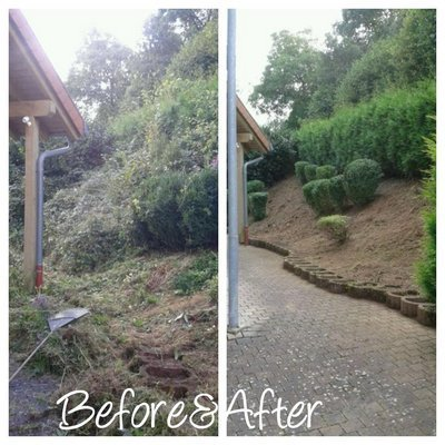 Debris Removal - Tree Landscaping - Michigan