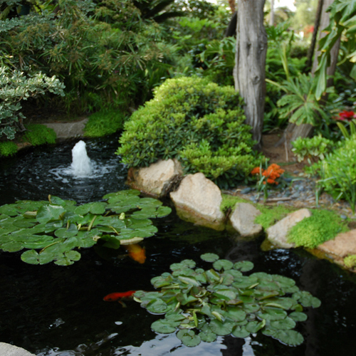 Koi Pond - Water Landscaping - New Jersey