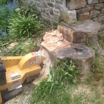 Stump Grinding - Tree Landscaping - Louisiana