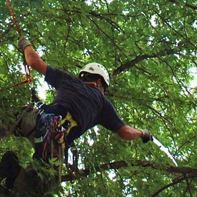 Tree Care - Tree Landscaping - Maine
