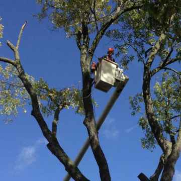 Tree Cutting - Tree Landscaping - Wisconsin