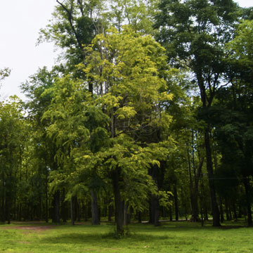 Tree Planting - Tree Landscaping - Delaware