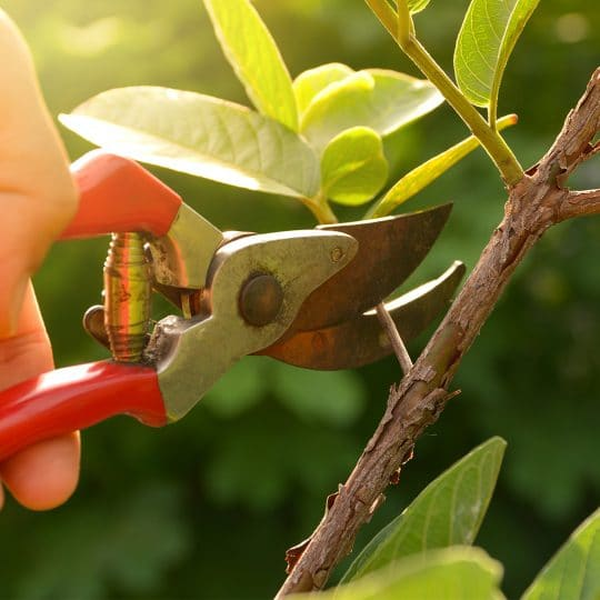 Tree Pruning - Tree Landscaping - Alabama