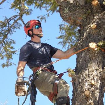 Tree Removal - Tree Landscaping - New Mexico