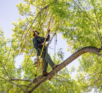 Tree Trimming - Tree Landscaping - Missouri